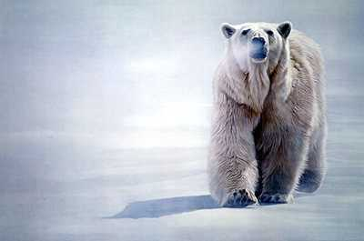 Face Off Polar by Terry Isaac Pricing Limited Edition Print image