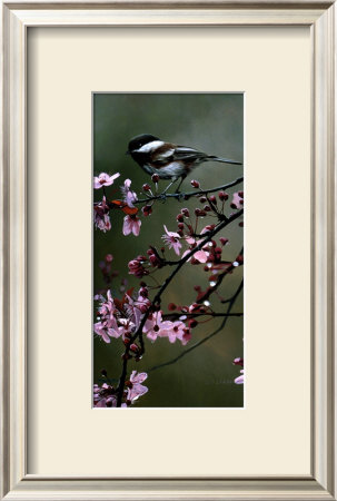Chestnut Chickadees by Terry Isaac Pricing Limited Edition Print image