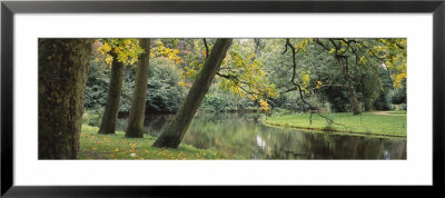 Trees Near A Pond In A Park, Vondelpark, Amsterdam, Netherlands by Panoramic Images Pricing Limited Edition Print image