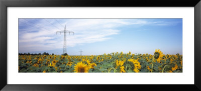 Electricity Pylons In A Field Of Sunflowers, Baden-Wurttemberg, Germany by Panoramic Images Pricing Limited Edition Print image