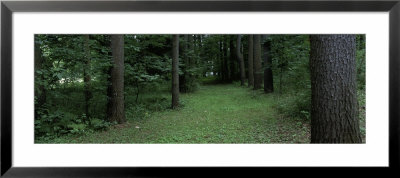 Trees In A Forest, Yaddo Gardens, Saratoga Springs, New York, Usa by Panoramic Images Pricing Limited Edition Print image