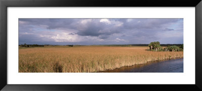 Big Cypress National Preserve Along Tamiami Trail Everglades National Park, Florida, Usa by Panoramic Images Pricing Limited Edition Print image