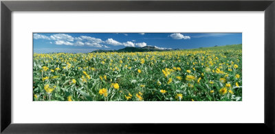 Flowers Growing In A Field, Rocky Mountains, Montana, Usa by Panoramic Images Pricing Limited Edition Print image