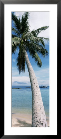 Palm Tree On The Beach by Panoramic Images Pricing Limited Edition Print image