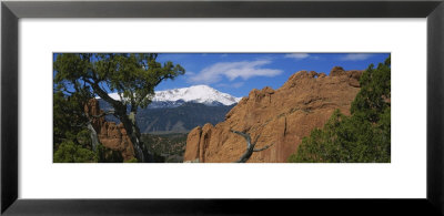 Trees In Front Of A Rock Formation, Pikes Peak, Garden Of The Gods, Colorado Springs, Colorado, Usa by Panoramic Images Pricing Limited Edition Print image