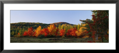 Trees In The Forest, Adirondack Mountains, Essex County, New York State, Usa by Panoramic Images Pricing Limited Edition Print image