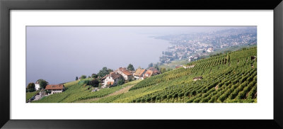 Vineyards, Lausanne, Lake Geneva, Switzerland by Panoramic Images Pricing Limited Edition Print image