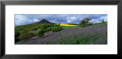 Bluebell Flowers In A Field, Cleveland, North Yorkshire, England, United Kingdom by Panoramic Images Pricing Limited Edition Print image