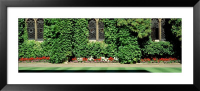 Ivy Covered Wall, Oxford University, England, United Kingdom by Panoramic Images Pricing Limited Edition Print image