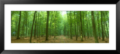 Pathway Through Forest, Mastatten, Germany by Panoramic Images Pricing Limited Edition Print image