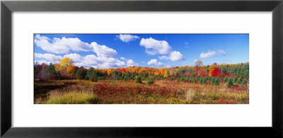 Autumn Foliage, New York State, Usa by Panoramic Images Pricing Limited Edition Print image