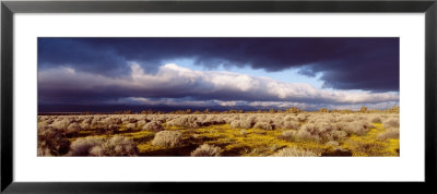 Clouds, Mojave Desert, California, Usa by Panoramic Images Pricing Limited Edition Print image