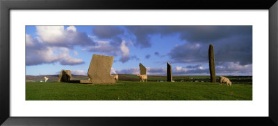 Sheep, Stones Of Stenness, Orkney Islands, Scotland, United Kingdom by Panoramic Images Pricing Limited Edition Print image
