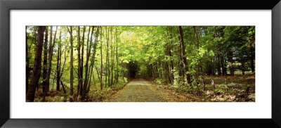 Trees On Both Sides Of A Road, Northeast Kingdom, Albany, Vermont, Usa by Panoramic Images Pricing Limited Edition Print image
