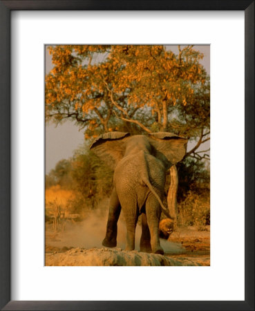 African Elephant Confronts A Lion by Beverly Joubert Pricing Limited Edition Print image