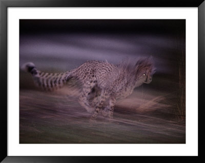 A Blurred View Of An African Cheetah Sprinting In The Darkness by Chris Johns Pricing Limited Edition Print image
