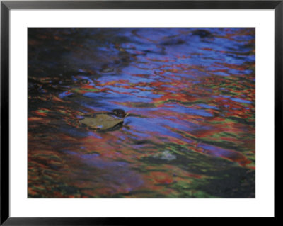 Autumn Leaves And Rainy Wet Pavement Reflect Neon Signs In Abstract by Stephen St. John Pricing Limited Edition Print image