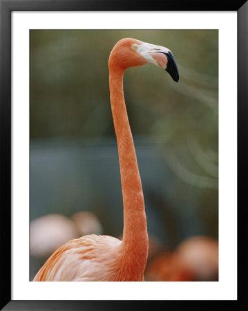 Flamingo by Vlad Kharitonov Pricing Limited Edition Print image