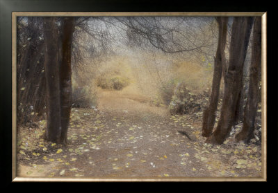 Silent Path by Barbara Kalhor Pricing Limited Edition Print image
