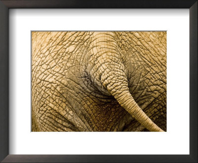 Closeup Of The Rear End Of An African Elephant by Tim Laman Pricing Limited Edition Print image