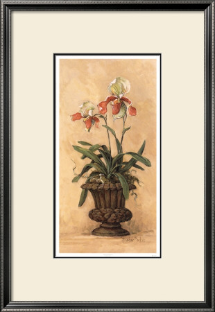 Orchid Revival Ii by Barbara Mock Pricing Limited Edition Print image