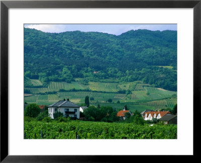 Village Of Pfaffstatten Amongst Vineyards With Vienna Woods Behind, Near Baden, Austria by Diana Mayfield Pricing Limited Edition Print image