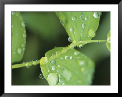 Close View Of Foliage And Twisted Stem With Glistening Drops Of Dew by Tom Murphy Pricing Limited Edition Print image