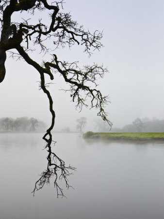 Foggy Landscape by Images Monsoon Pricing Limited Edition Print image