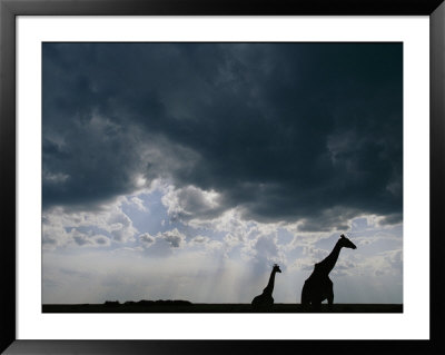 Silhouette Of A Female Reticulated Giraffe And Her Young by Michael Nichols Pricing Limited Edition Print image