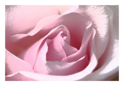 Silk Rose Ii by Miguel Paredes Pricing Limited Edition Print image