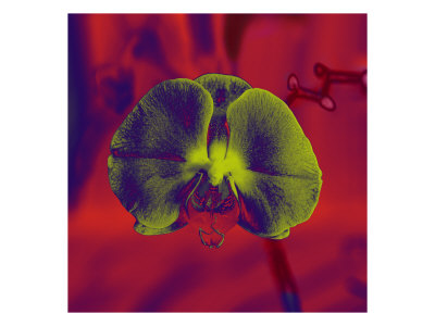 Flores Xiv by Miguel Paredes Pricing Limited Edition Print image