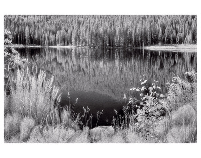 Diemer Lake by Scott Peck Pricing Limited Edition Print image