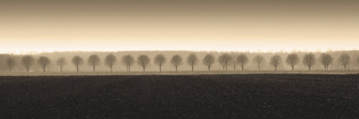 Dappled Morning Fields by Heather Ross Pricing Limited Edition Print image