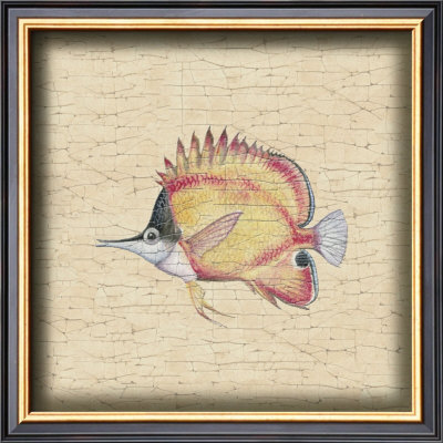 Tropical Fish Ii by Debra Swartzendruber Pricing Limited Edition Print image