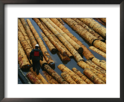 A Lumberman Walks On Floating Raw Logs Ready For Export by Joel Sartore Pricing Limited Edition Print image