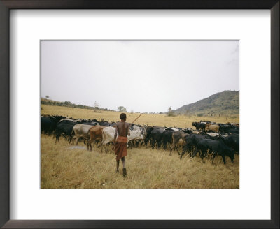 A Boy Tends To His Herd Of Cattle by Joe Scherschel Pricing Limited Edition Print image