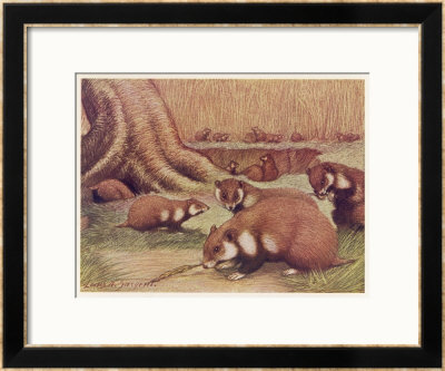 Examples Of The Rhine Hamster by Louis A. Sargent Pricing Limited Edition Print image