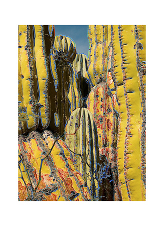 Cactus Forest, Isla San Jose by Chip Scarborough Pricing Limited Edition Print image