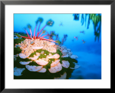 Underwater Landscape Made Of Foodstuffs by Hartmut Seehuber Pricing Limited Edition Print image