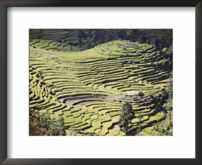 Terraced Fields As Seen In Winter From Nagarkot, Himalayas, Kathmandu Valley, Nepal by Don Smith Pricing Limited Edition Print image