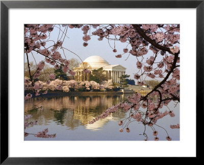 Cherry Blossoms Frame The Jefferson Memorial Across The Tidal Basin by Rex Stucky Pricing Limited Edition Print image