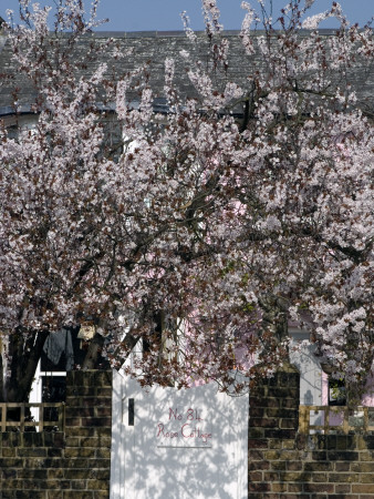 Blossom At The Gate Of Rose Cottage, Strand On The Green, London by Natalie Tepper Pricing Limited Edition Print image