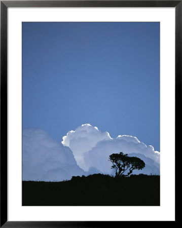 White Cumulus Clouds Billow Up Behind A Lone Tree On A Hilltop by Pablo Corral Vega Pricing Limited Edition Print image