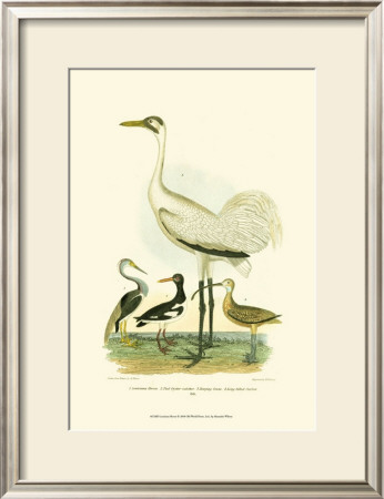Louisiana Heron by Alexander Wilson Pricing Limited Edition Print image