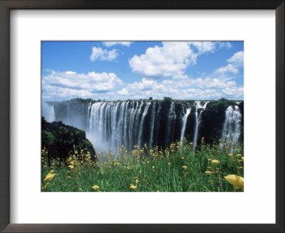 Flowers In Bloom With The Victoria Falls Behind, Unesco World Heritage Site, Zambia, Africa by D H Webster Pricing Limited Edition Print image