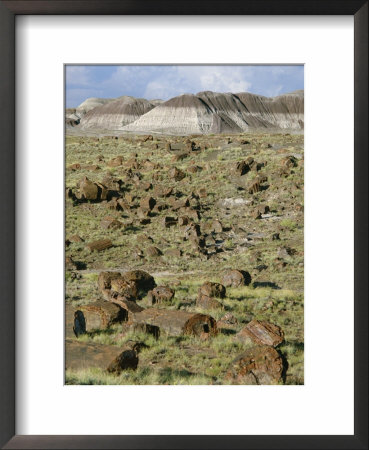 Fossil Logs 200 Million Years Old Scattered Over Desert Floor In National Park, Arizona, Usa by Tony Waltham Pricing Limited Edition Print image