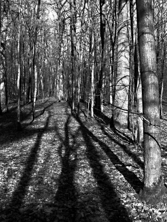Tree Shadows In Forest by Ilona Wellmann Pricing Limited Edition Print image