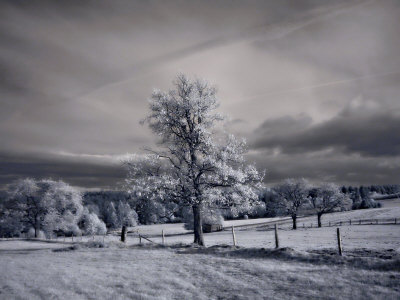 Rural Idyll by Ilona Wellmann Pricing Limited Edition Print image