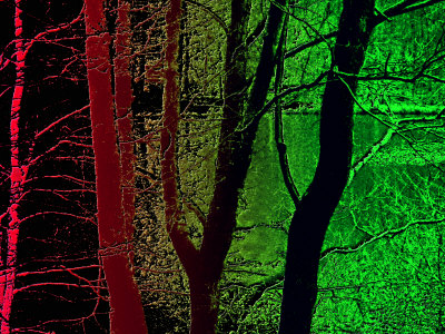Red And Green Woods And Lake by Ilona Wellmann Pricing Limited Edition Print image