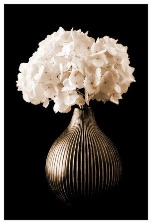 Hydrangeas In A Vase by Christine Zalewski Pricing Limited Edition Print image